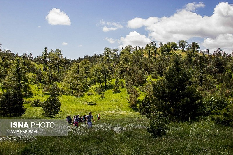 Shahroud Tourist Attractions: Abr Forest