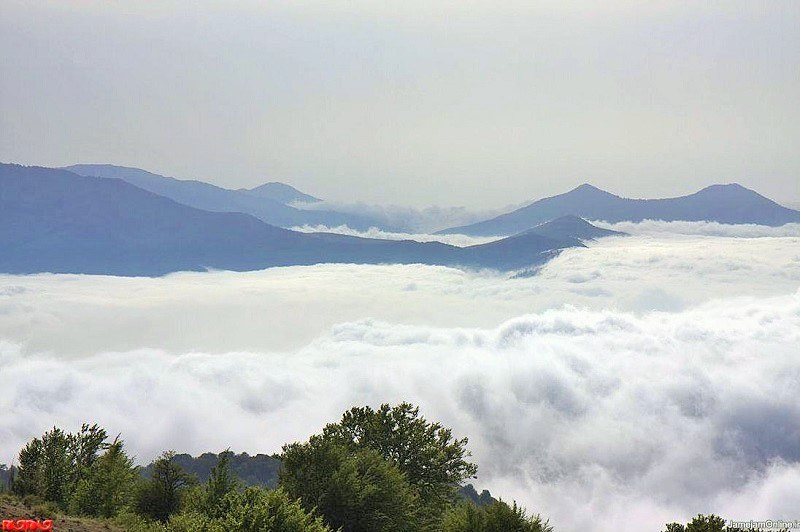 Shahroud Natural Attractions: Clouds Forest