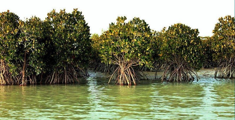 Hara, Iranian mangroves Forests in Hormozgan