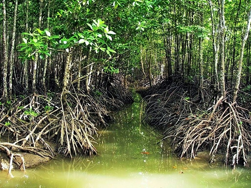 Trees of Hara Mangrove Forests