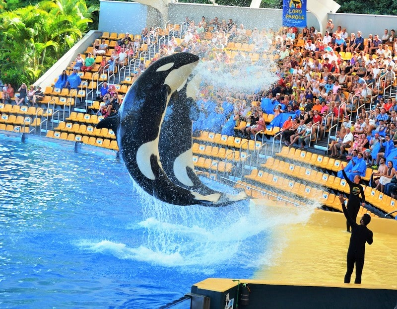 Inhumane Show of Arka Dolphins and Whales